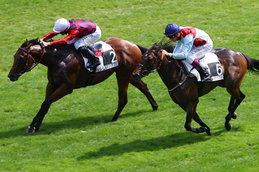 Allenare un cavallo da corsa con approccio metodico e - Avere un cavallo ...