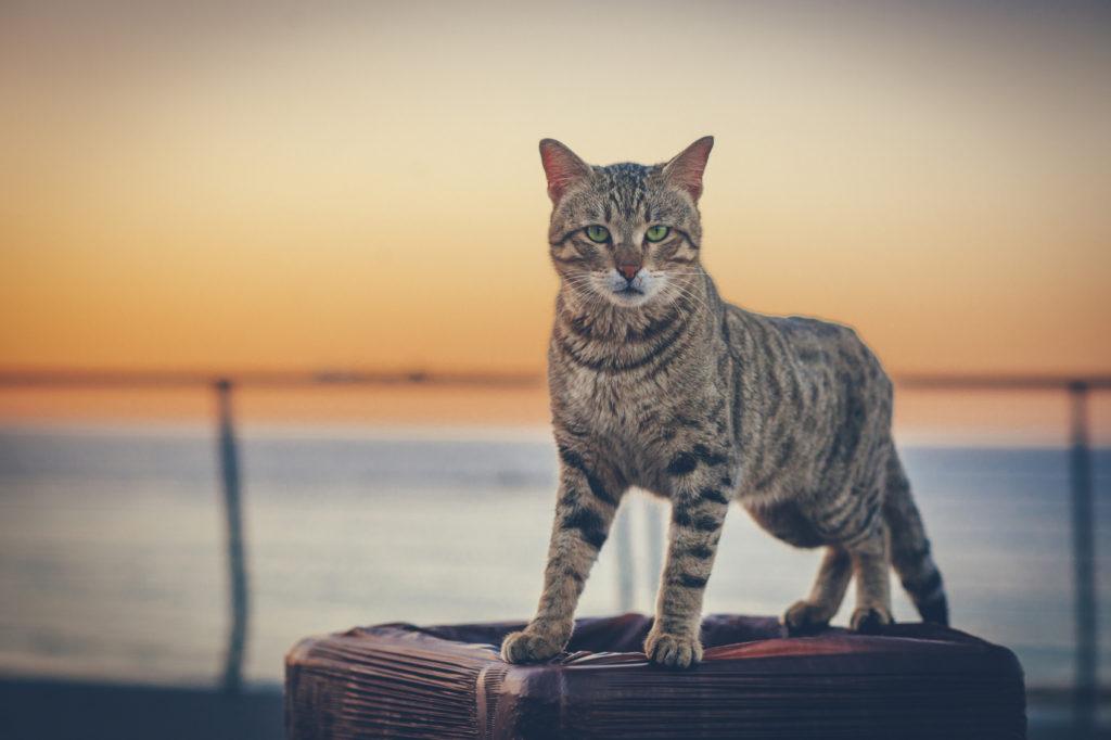 La Personalità Del Gatto In Base Al Colore Del Pelo Passione Animali
